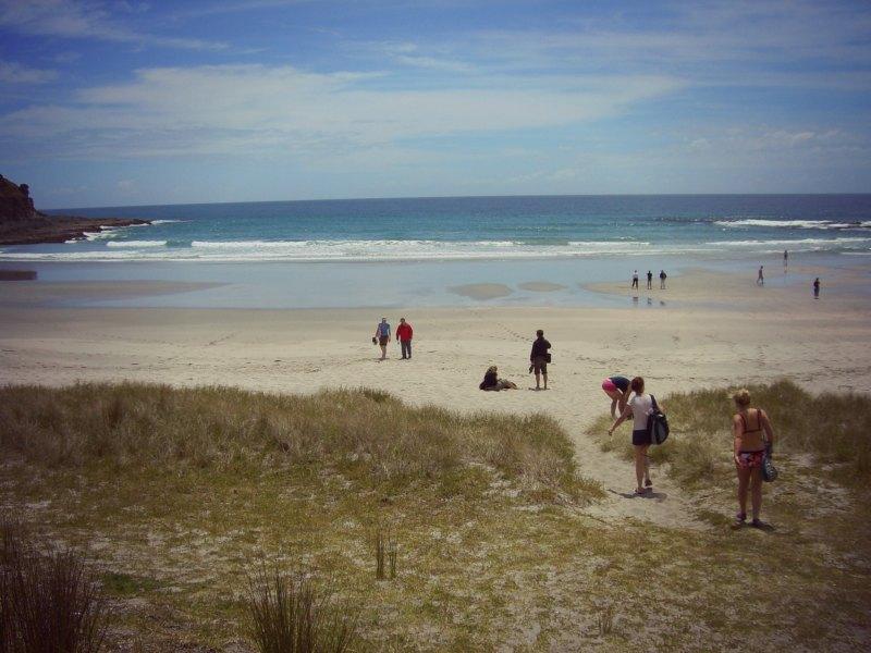 NZ1_ 221