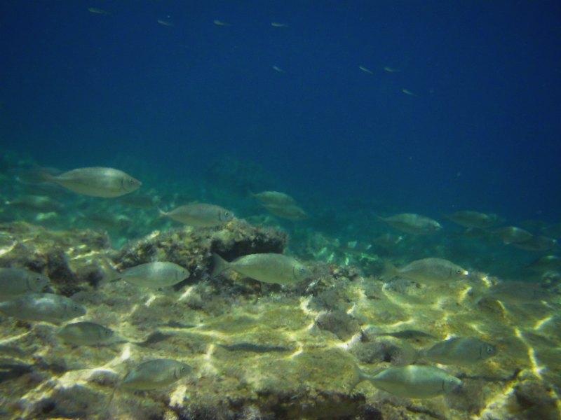 Im Golf von Gökova: Beim Schnorcheln