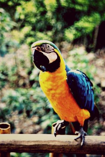 Papagei in der Dschungel Lodge in Yolosa