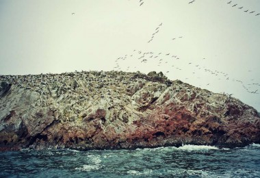 Islas Ballestas - das Galapagos des kleinen Mannes