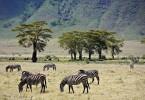 Ngorongoro Krater - Tansania
