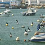 Kormorane im Hafen