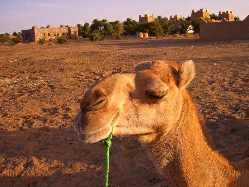 Wüstentour mit Kamel