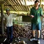 Plantagentour: Wissenswertes über die Kokusnussernte