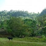 Grünes Baracoa