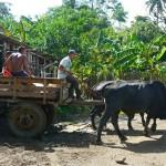 Finca-Tour in Baracoa: Ochsenkarren