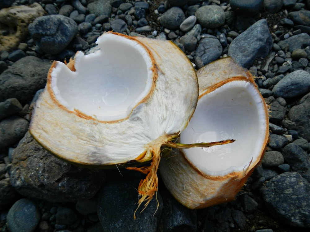 Frische Kokosnuss zur Stärkung nach der Wanderung