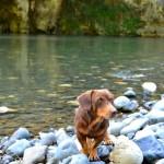 Treuer Begleiter am Rio Yumuri