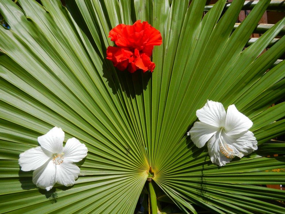 Tropisches Baracoa