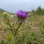 Astypalea: Wandern in den Bergen