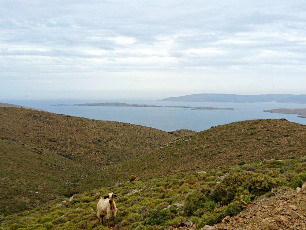 Ziege in den Bergen von Astypalea