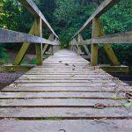 Wanderung auf dem Manderscheider Burgenstieg