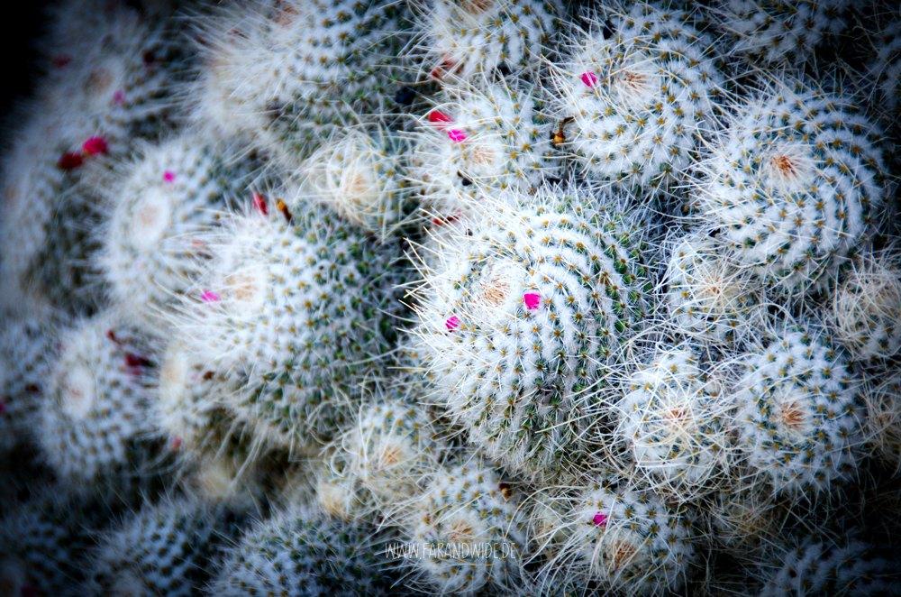 Lanzarote: Im Kaktusgarten