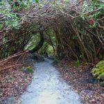 Verwunschene Wanderwege, Parknasilla Resort