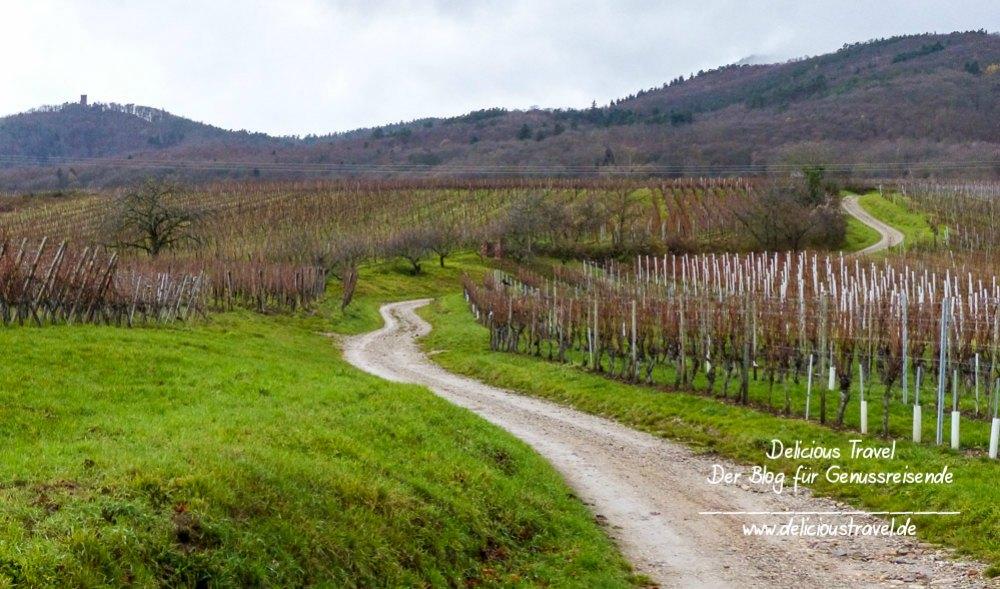 Wandern zwischen Weinreben in Elsass