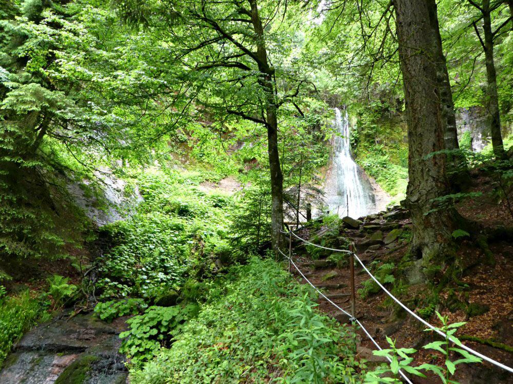 Sankenbachsteig in Baiersbronn: Wanderung im Nordschwarzwald