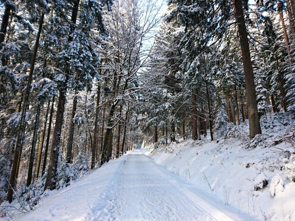 Winter im Schwarzwald - Winterwanderung in Baiersbronn