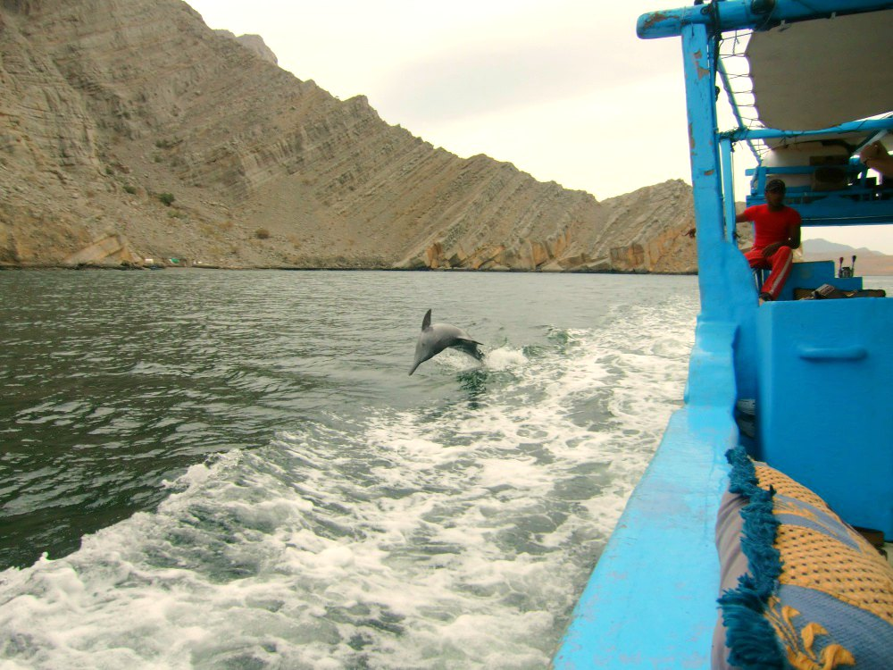 Musandam: Delfine begleiten unsere Bootstour durch die Fjorde | Bild: Road Traveller