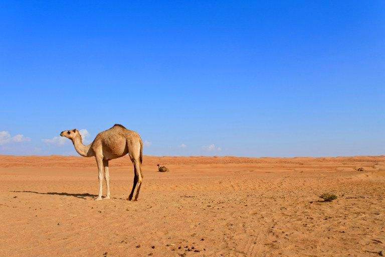 Roadtrip durch den Oman   Bild: Travellus