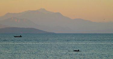 Griechenland: Delfin im Ambrakischen Golf