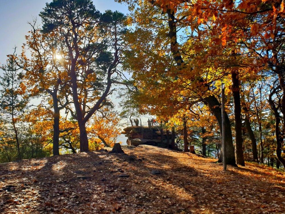Wanderung in der Pfalz: Ringelsberghütte und Orensfelsen