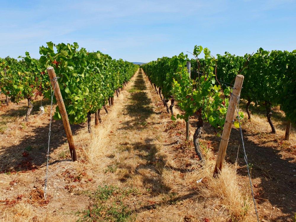 Weinberge im Weinanbaugebiet Nahe