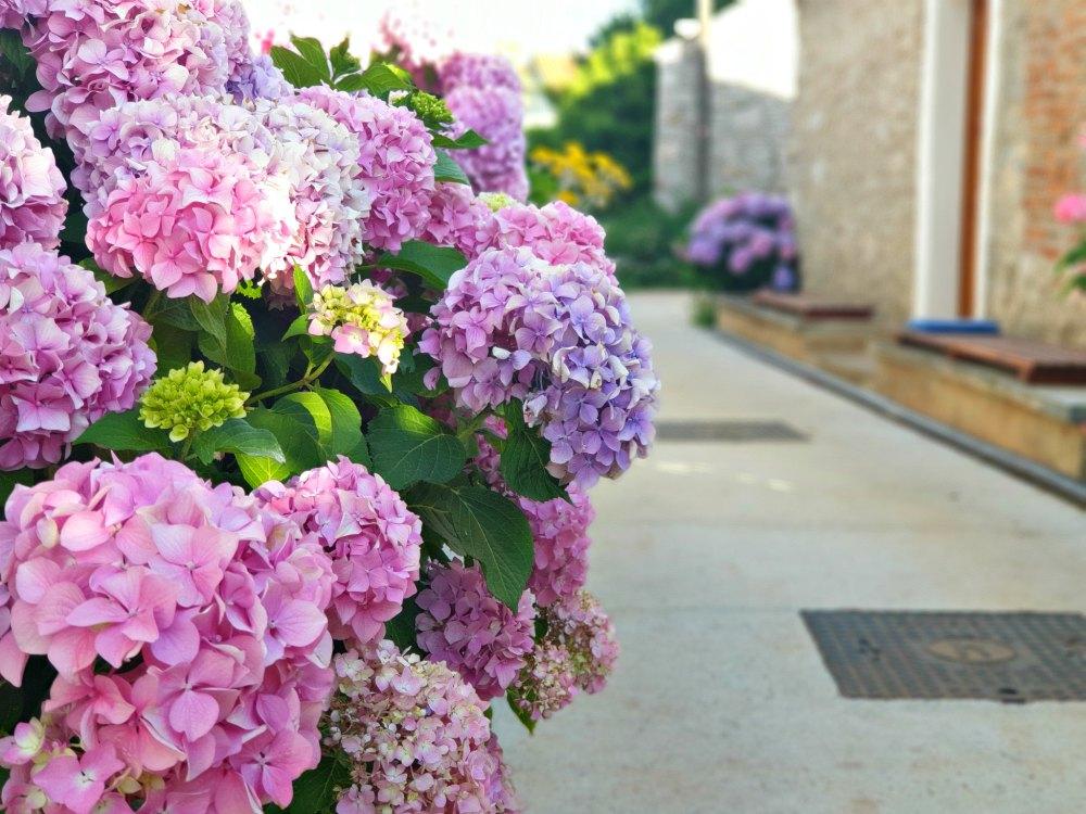 Kvarner Bucht: Blumeninsel Ilovik