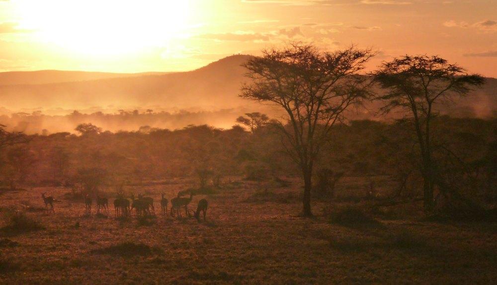Foto: Savanne bei Sonnenuntergang, Serengeti