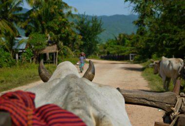 Kambodscha: Homestay im Eco Village Chambok