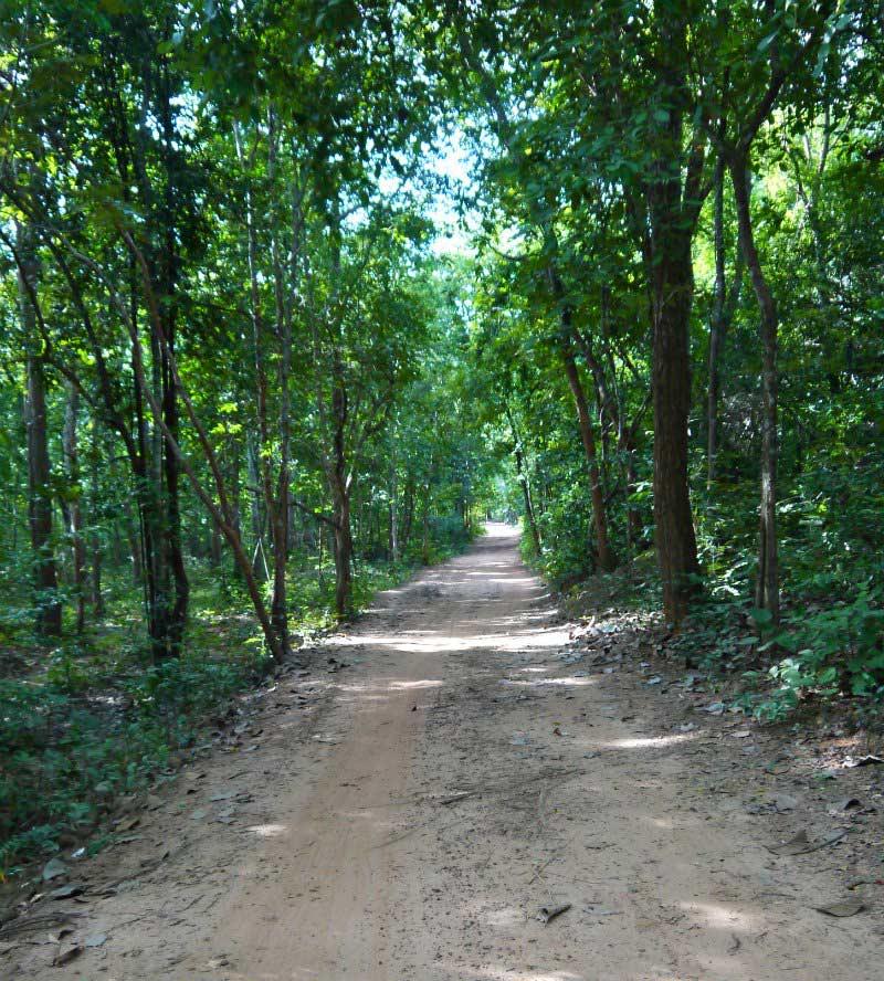 Ökotourismus-Projekt Chambok: Wälder rund ums Dorf