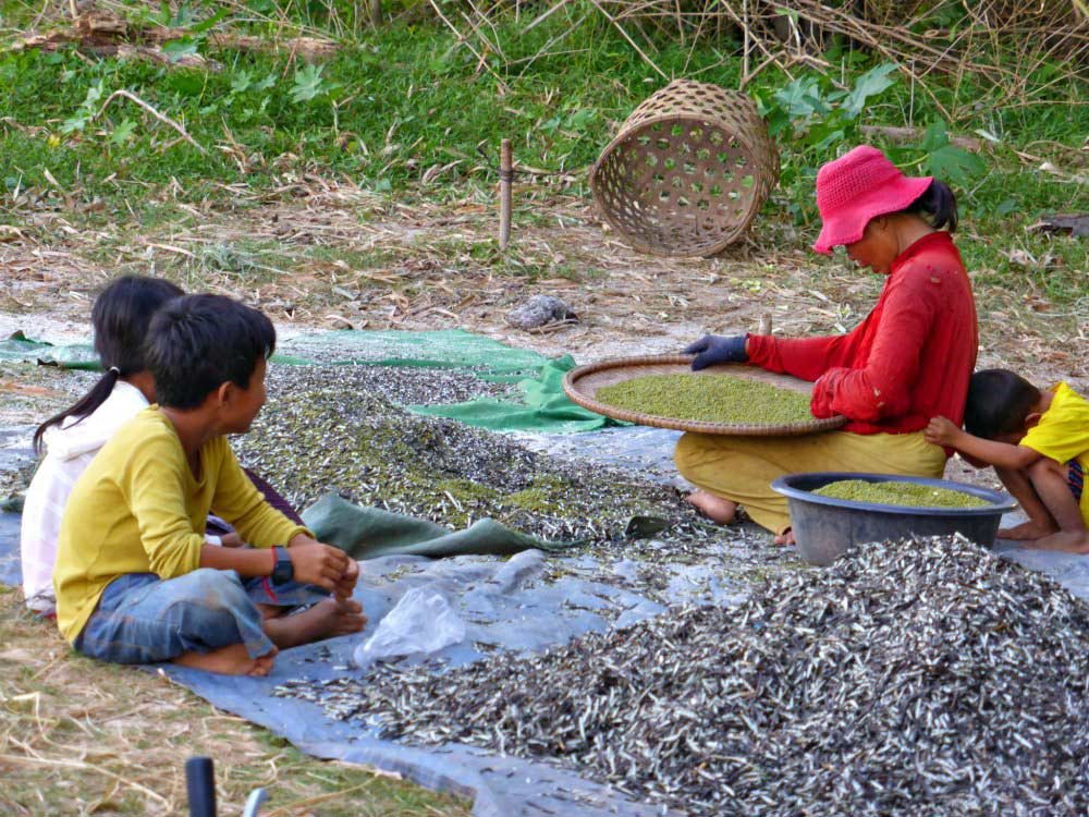 Feldarbeit in Kambodscha - Sesamanbau