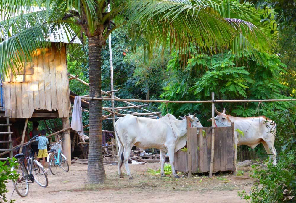 Dorfidylle auf Koh Pen
