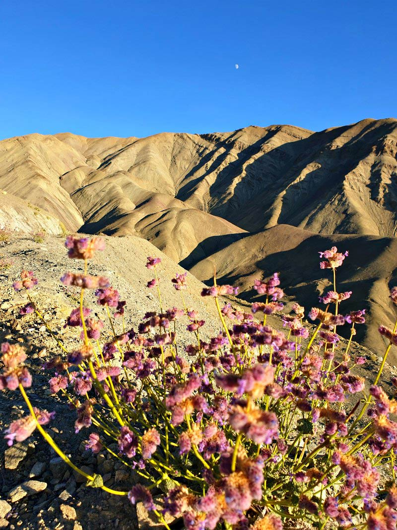 Landschaft bei Ang / Ladakh