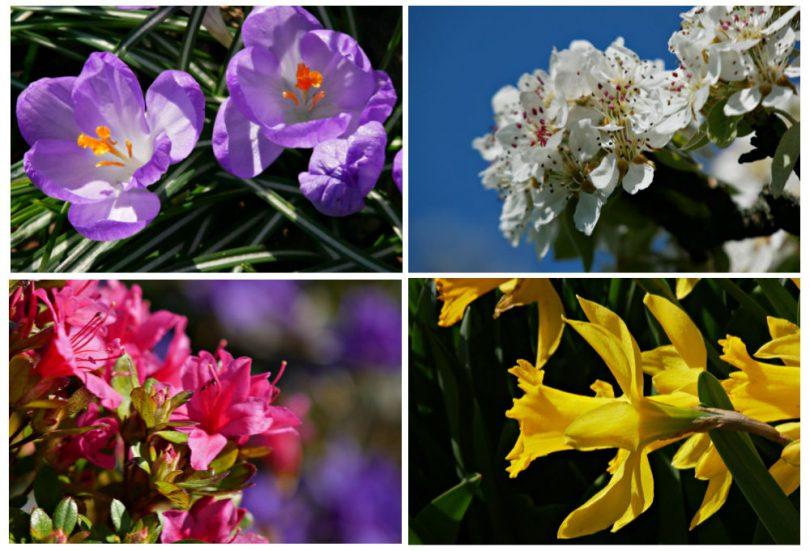 20 Frühlingsbilder aus dem heimischen Garten