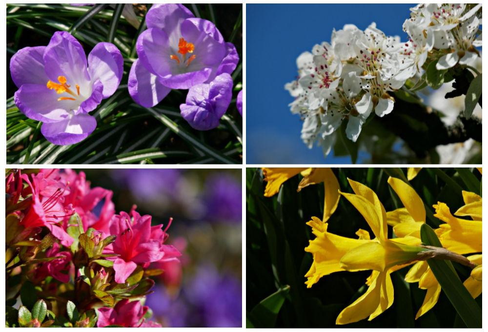 Botanische Gärten weltweit - cover