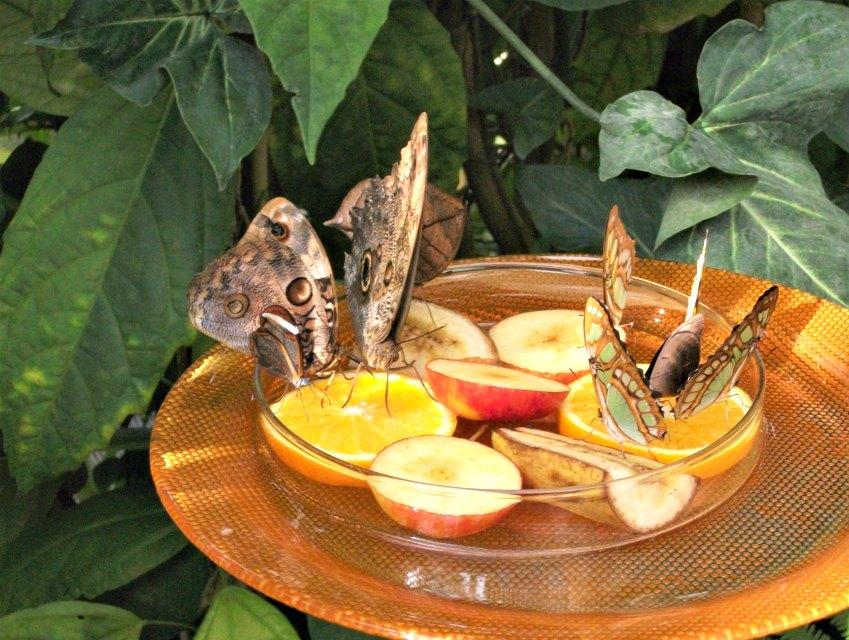 Schmetterlingshaus auf der Insel Mainau | Bild: Die bunte Christine
