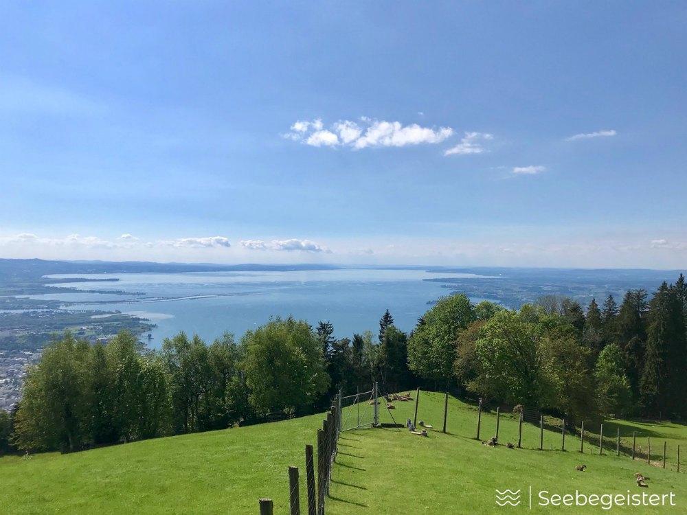Top 2 Bodensee-Aussicht: Blick vom Pfänder | Bild: Seebegeistert