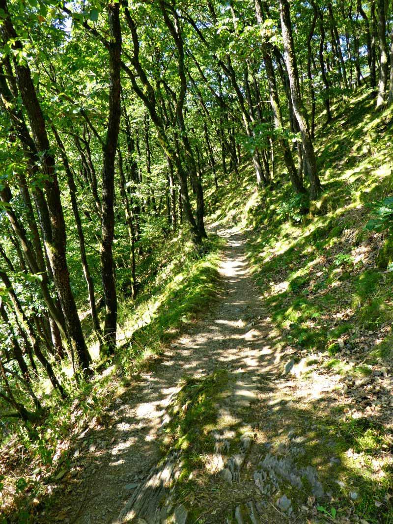Schattige Pfade auf dem Manderscheider Burgenstieg