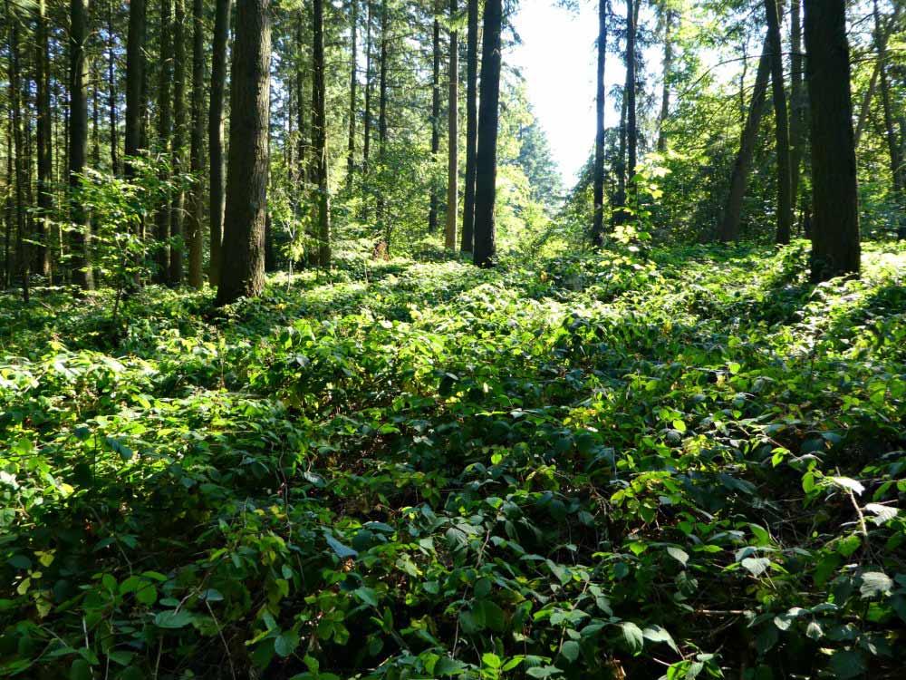 Manderscheider Burgenstieg: Waldidylle