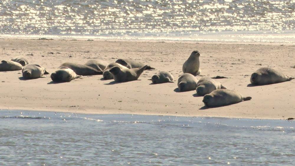 Auf dem Weg nach Baltrum passiert die Fähre auch die Robbenbänke vor Norderney | Bild: 2 on the go