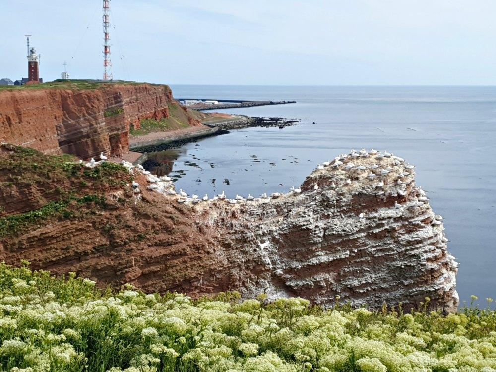 Deutschlands schönste Inseln: Helgoland ist ein Paradies für Vogelbeobachter | Bild: Erlebe Schleswig Holstein