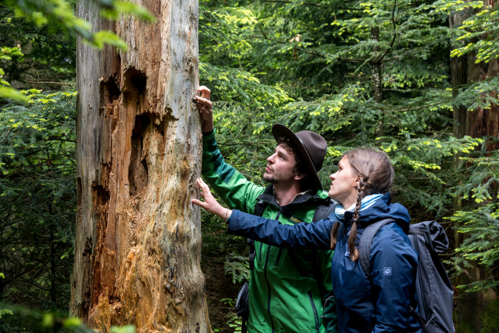 Ein toter Baum ist voller Leben, man muss nur genau hinschauen; Bildnachweis: TMBW / Gregor Lengler