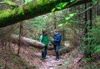 Bei einer Rangertour im Nationalpark Schwarzwald entdeckt man viele kleine Naturwunder; Bildnachweis: TMBW / Gregor Lengler