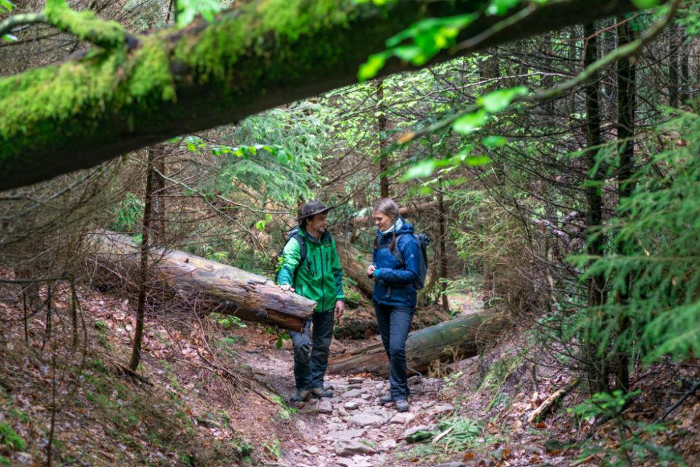 Wald ohne Eile: Rangertour im Nationalpark Schwarzwald
