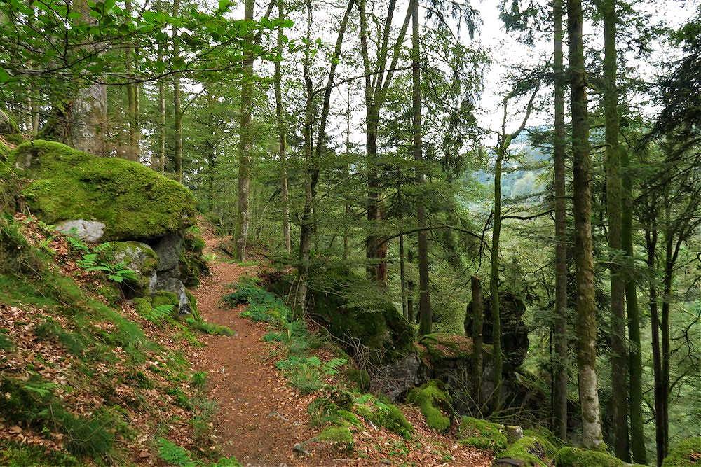 Fernwanderweg Schluchtensteig | Bild: Travellerblog