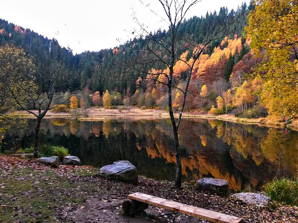 Herbststimmung auf dem Baiersbronner Sankenbachsteig | Bild: Travelsanne