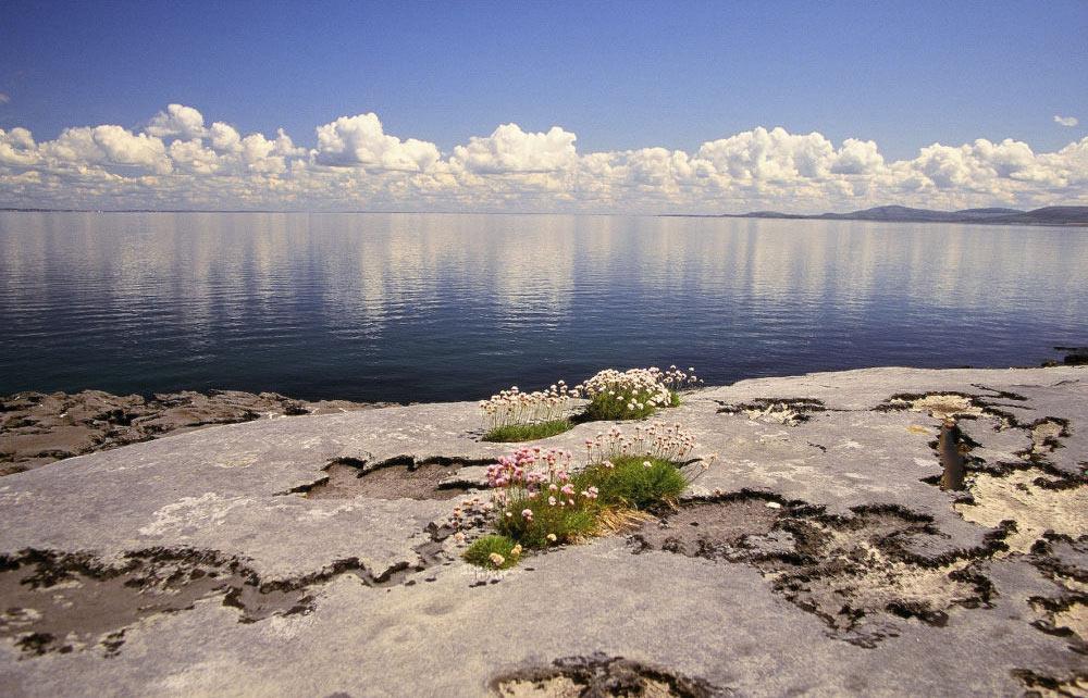 Einzigartige Flora im Burren Nationalpark | Bild: Tourism Ireland