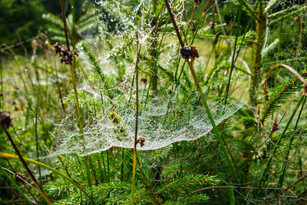 Herbst im Schwarzwald: Der morgendliche Tau glitzert im Spinnennetz