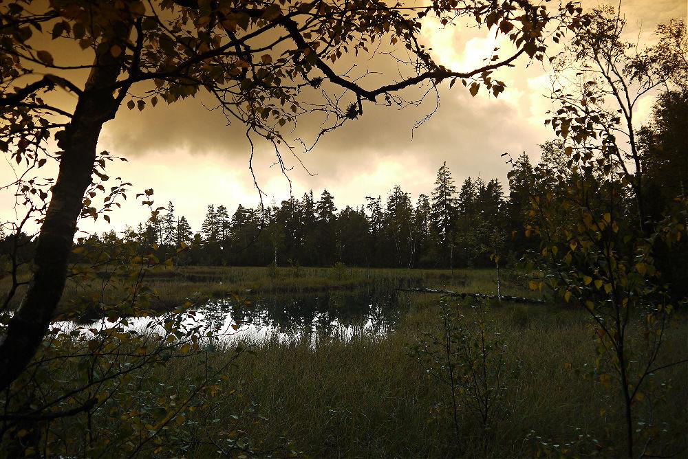 Mystische Stimmung am Hochmoor Kaltenbronn