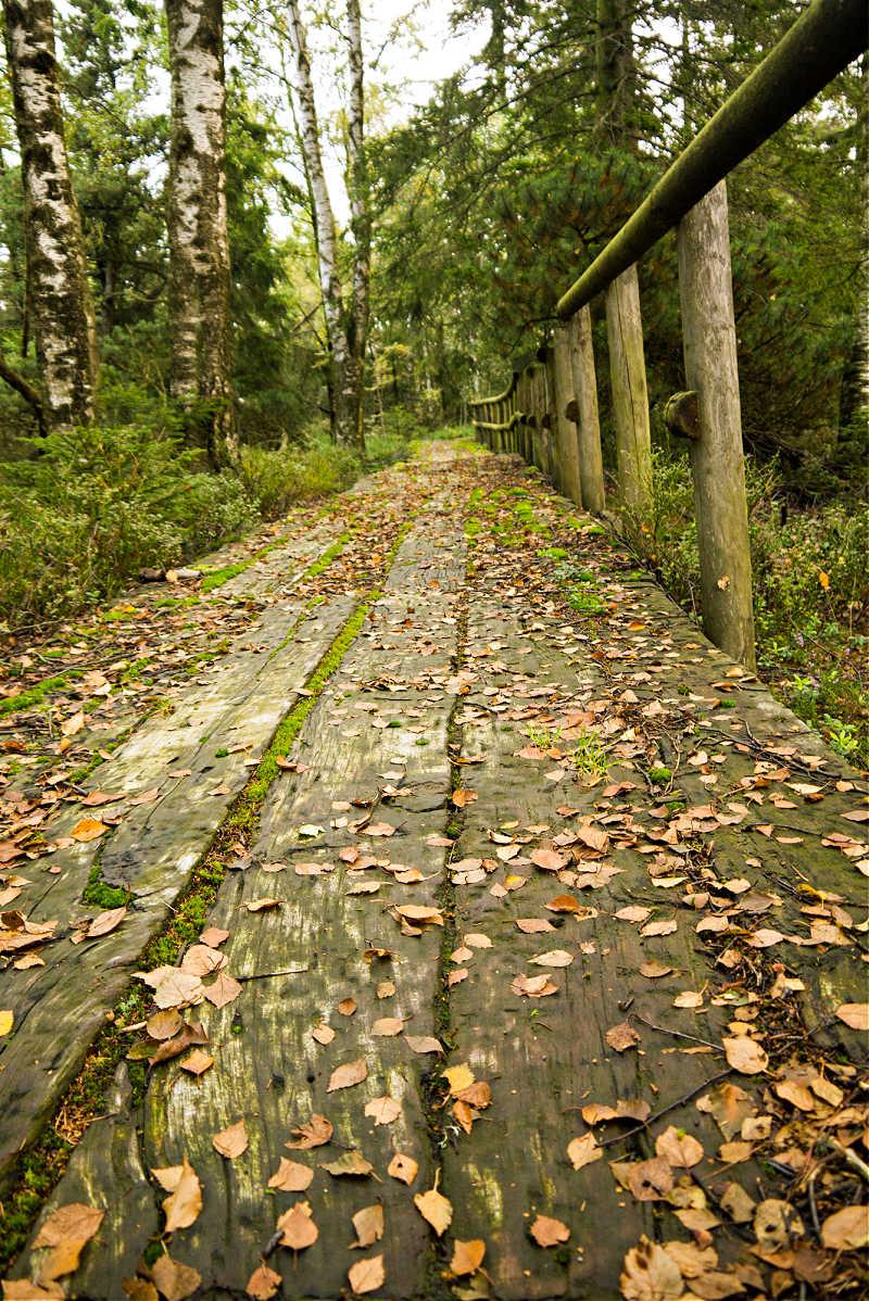 Kaltenbronn: Über Holzbohlenwege geht es durchs Moor